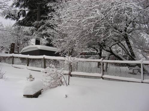 West Coast Winter Wonderland