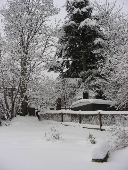 Dec 22 Bird Feeder Tree in Back Yard