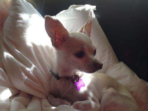 Nestle's Copper Viking Weave Necklace with Dog Tag ..... Sunning on her feather bed
